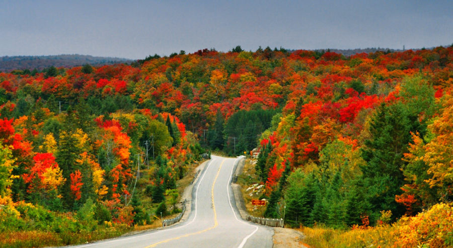 14 Tips For Fall Driving