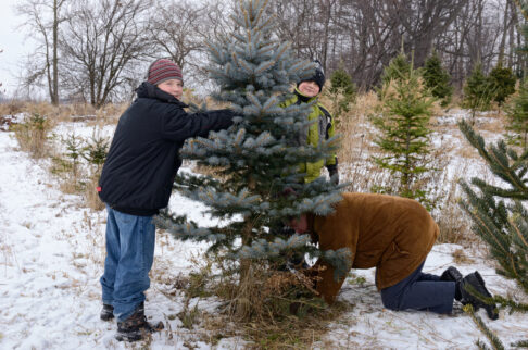 Cutting Down Your Own Christmas Tree