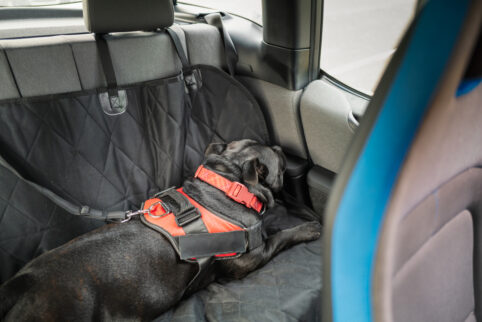 Seat Covers That Will Work for You and Your Family