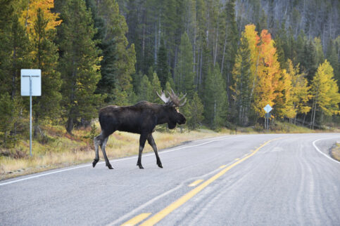 What Is the Moose Test?